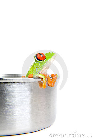 Frog on cooking pot isolated