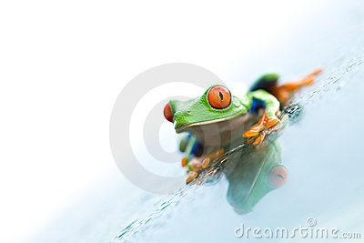 Frog on glass over white