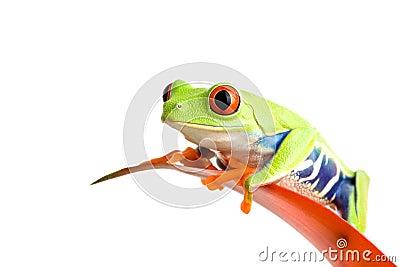 Frog on guzmania