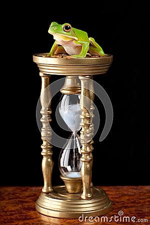 Frog on hour-glass