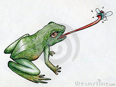 Frog hunting flies