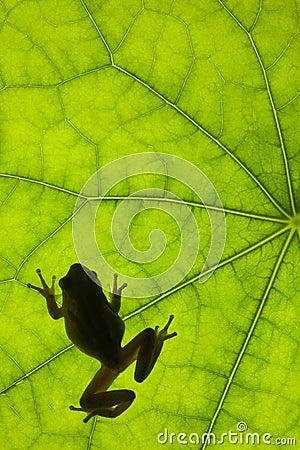 Frog on Leaf