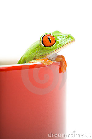 Frog looking out of cooking po