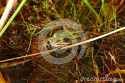 Frog lurking.