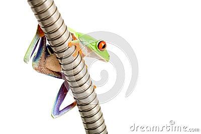 Frog on metal tube isolated
