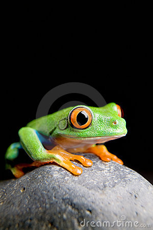 Free Frog On A Rock Isolated Black Stock Photography - 5244832