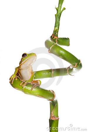 Free Frog On Bamboo Curl Royalty Free Stock Photography - 10256997