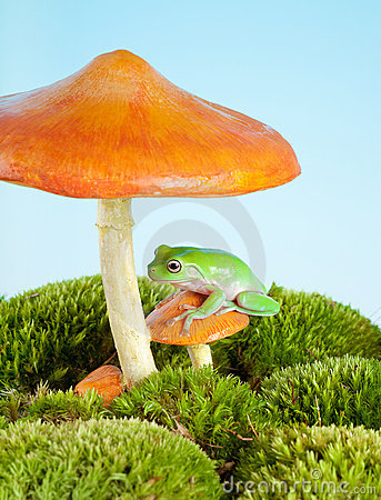 Free Frog On Mushroom Royalty Free Stock Photography - 12062397