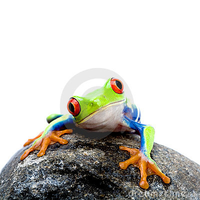 Free Frog On Rock Royalty Free Stock Photo - 2422165