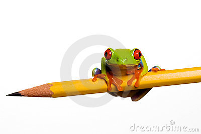 Frog on a pencil