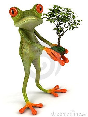 Frog with a plant