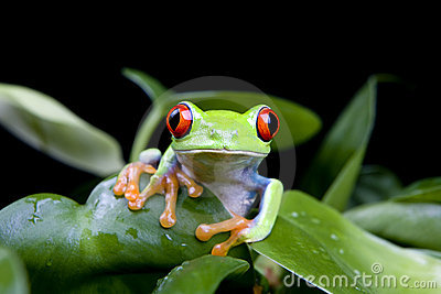 Frog in plant isolated on black