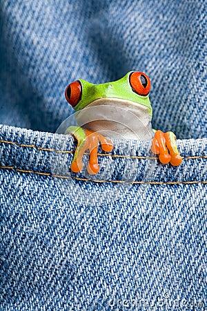 Frog in a pocket