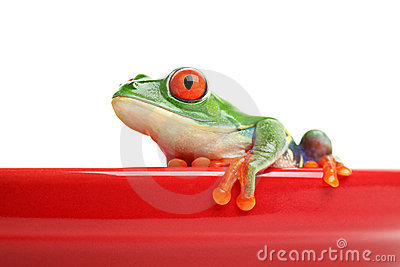 Frog on red pot isolated