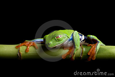 Frog at rest, isolated black