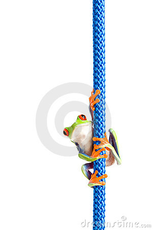 Frog on a rope isolated white