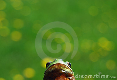 Frog s perspective
