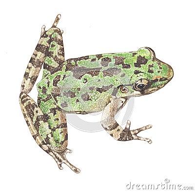 Frog-schmaker frog