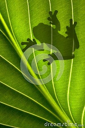 Free Frog Shadow Royalty Free Stock Photos - 14422348