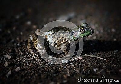 Frog Side Dark