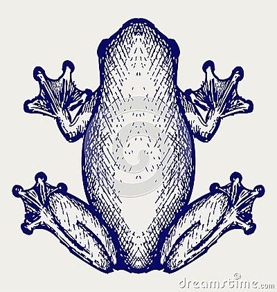 Free Frog Sketch Royalty Free Stock Photos - 30886088
