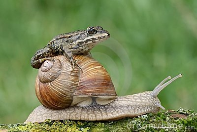 Frog on snail