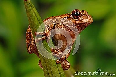 Frog on stalk