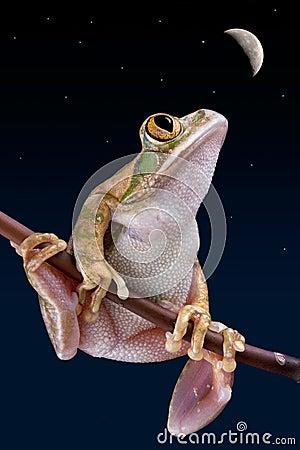 Frog staring at moon