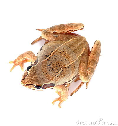 Free Frog Up Royalty Free Stock Photography - 3423867