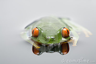 Frog in water