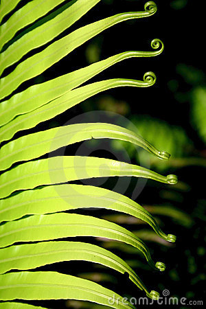 Free Frond Composition Stock Image - 5233291