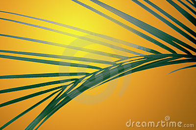 Frond at sunset