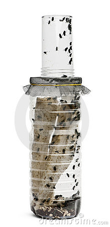 Front view of Fly breeding bottle