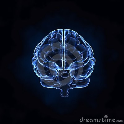 Front view of human brain