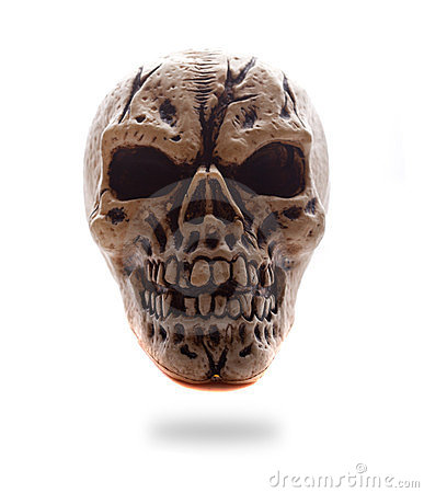 Frontal View Human Skull