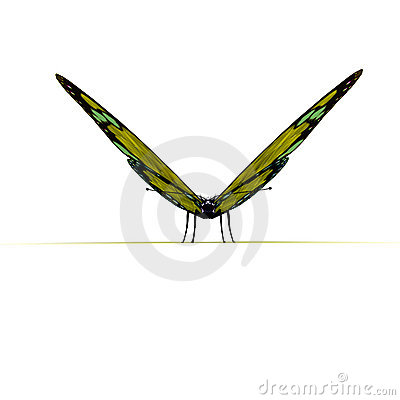 Frontal View Of Yellow Butterfly Stock Images - Image: 11326294