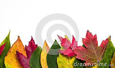 Frontera de la hoja del otoño
