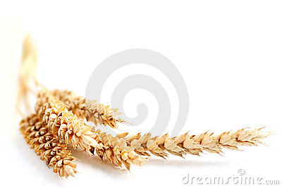 Frontera del trigo