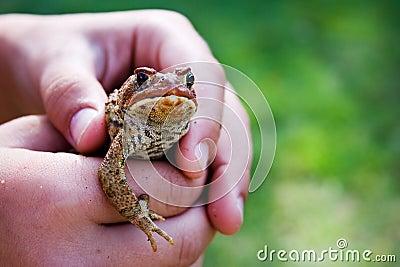 Frosch in den Händen