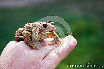 Frosch in der Hand