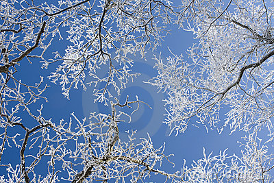 Frost cover branches