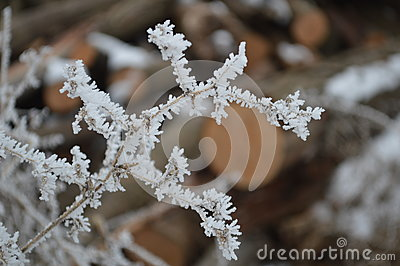 Frost covered twigs close up