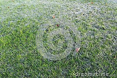 Frost Grass