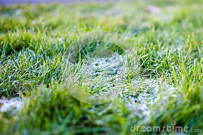 Frost On Grass Free Public Domain Cc0 Image