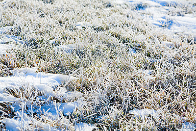 Frost on the ground