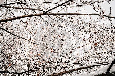 Frost And Ice On Branches Free Public Domain Cc0 Image