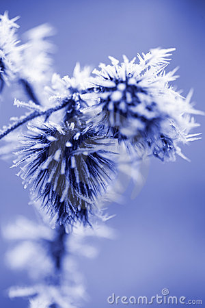 Free Frost Ice Crystals On Thistle Weed Royalty Free Stock Photo - 5884795