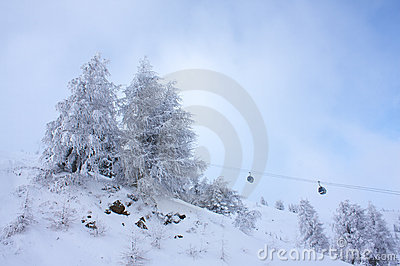 Frosted firs at the ski slope.