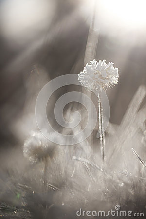 Free Frosted Grass Royalty Free Stock Photos - 27765948