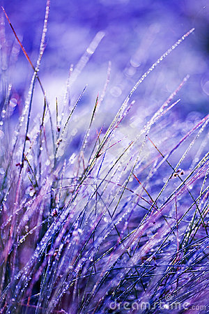 Free Frosted Grass Royalty Free Stock Photo - 6873955